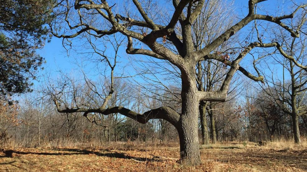Toronto's Ancient Trees with Eric Davies