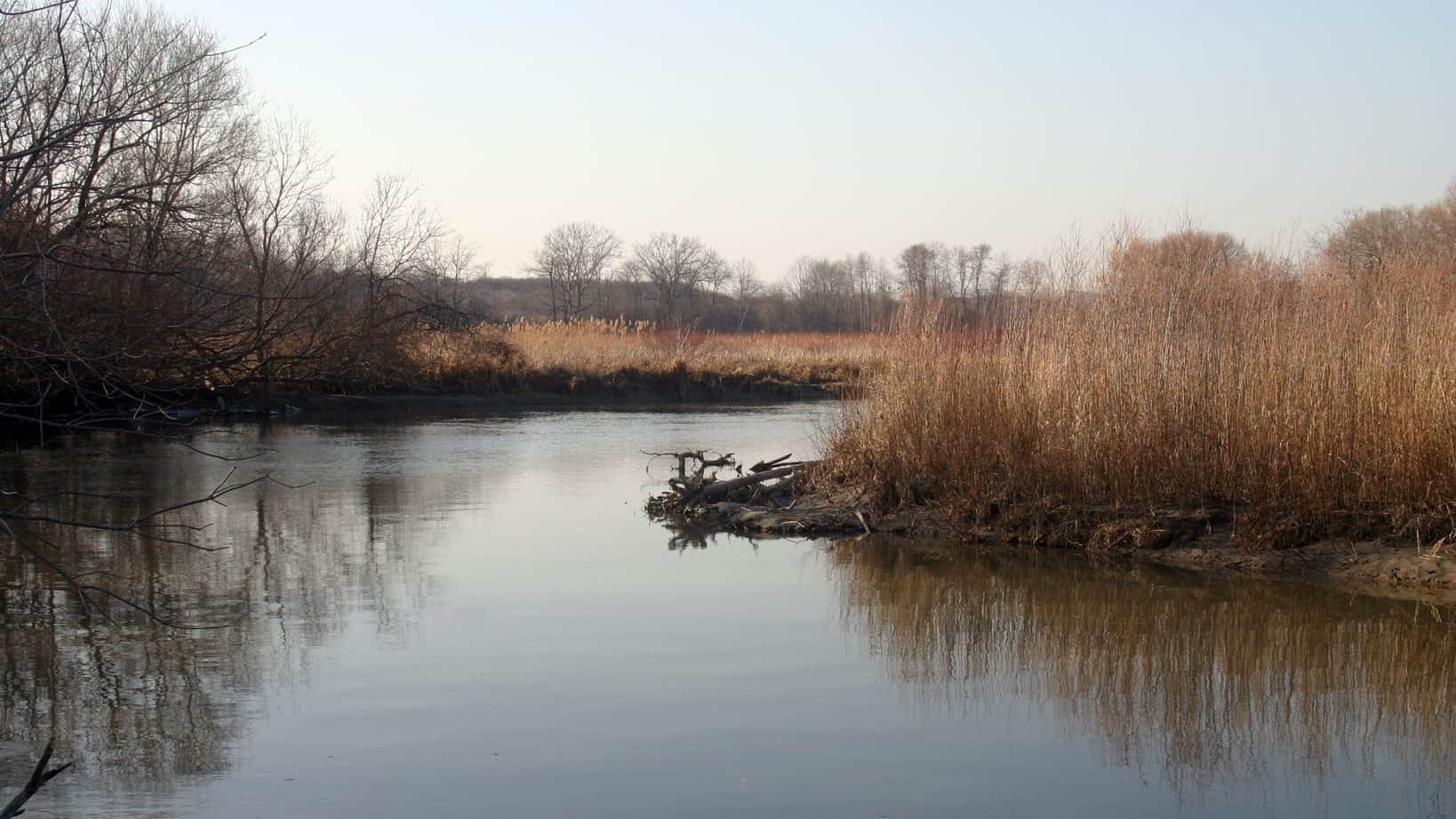 Duffin's Creek wetland