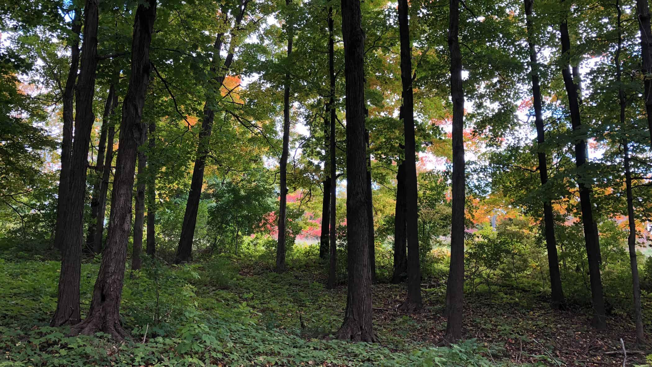LPAT - view of woods