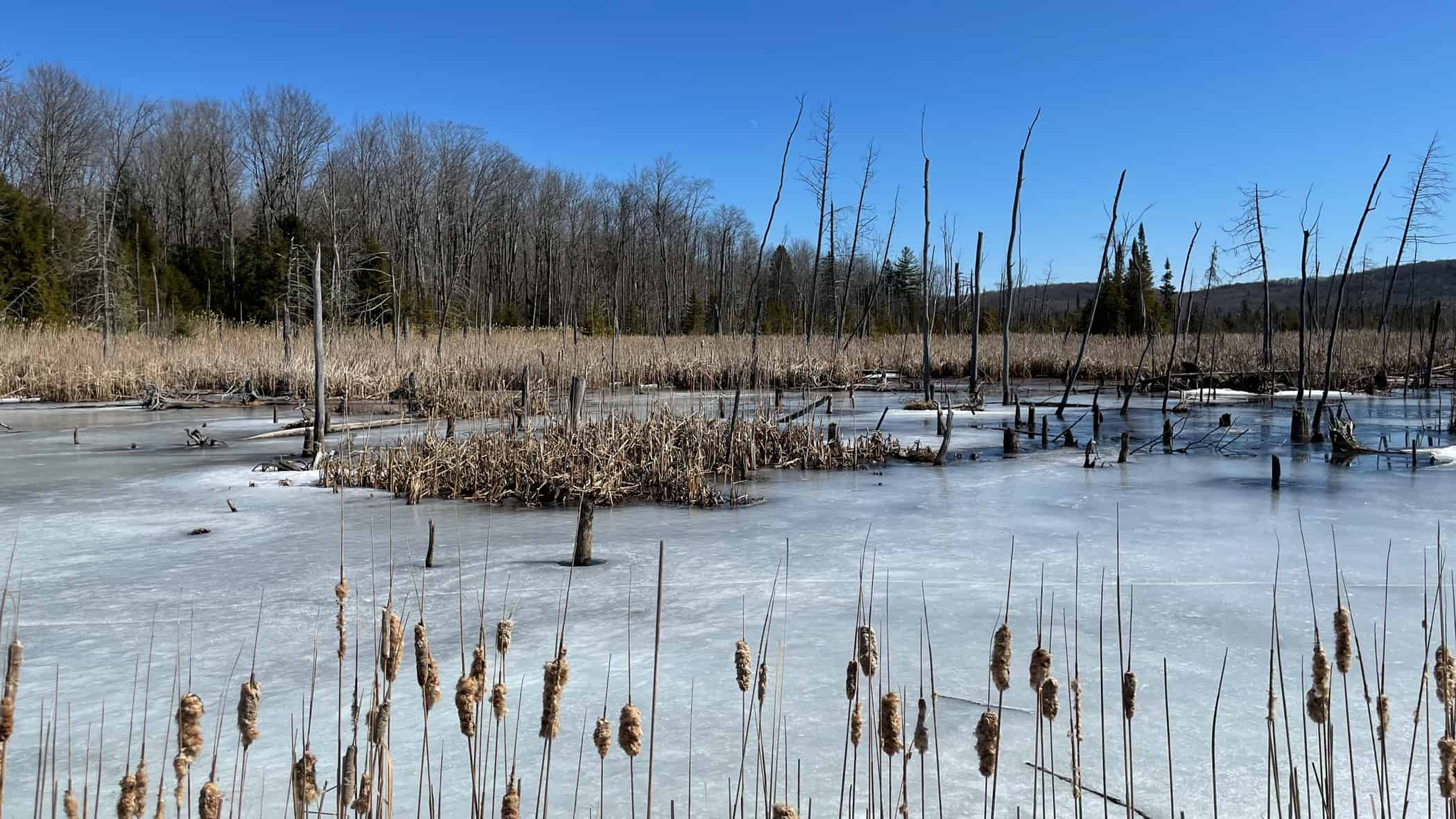 March - Ontario marshland